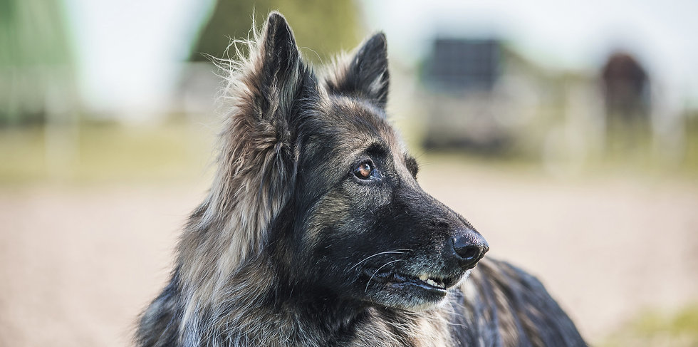 Reitstall Schloh Wachhund
