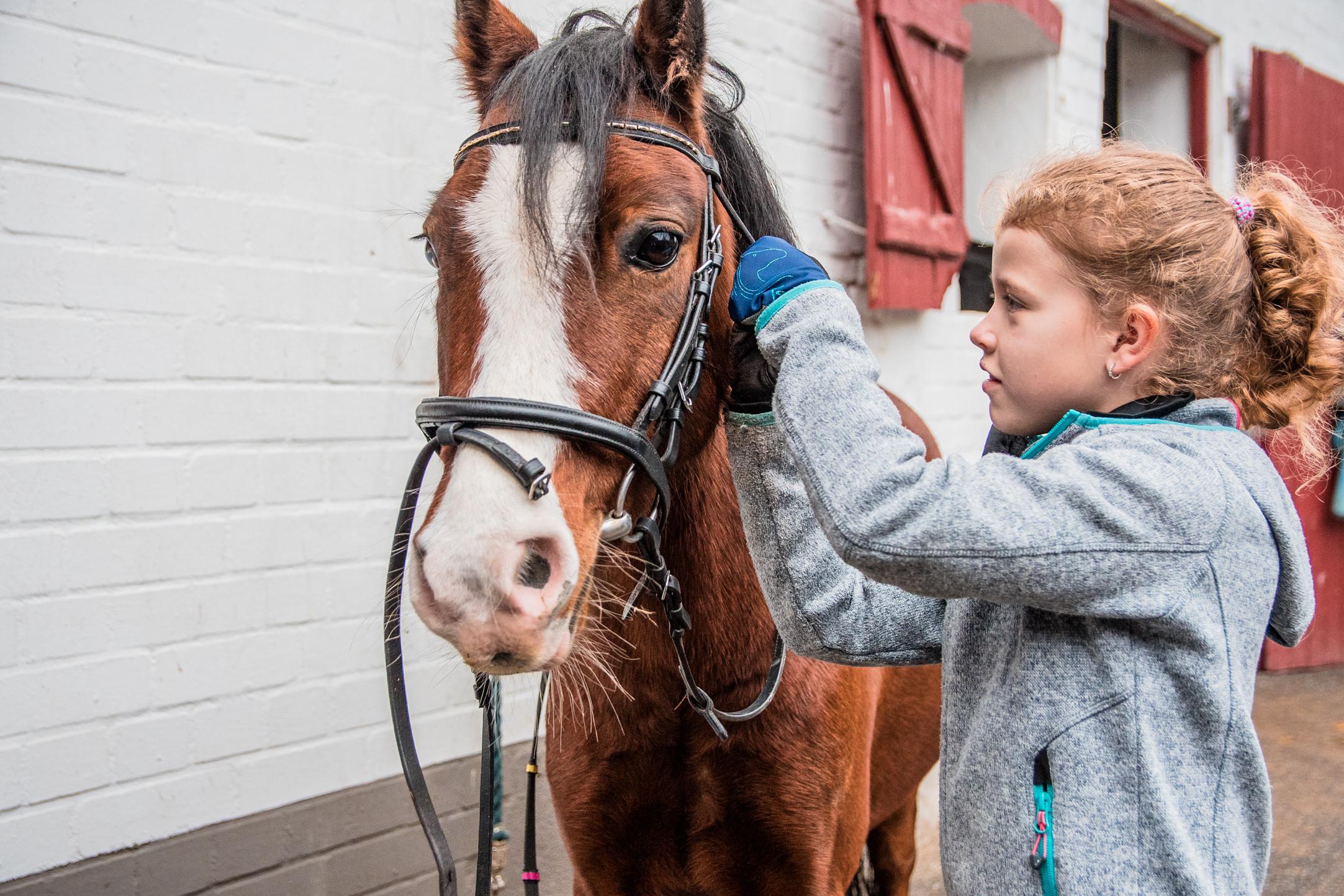 Pferdeführerschein Umgang Feb 2021