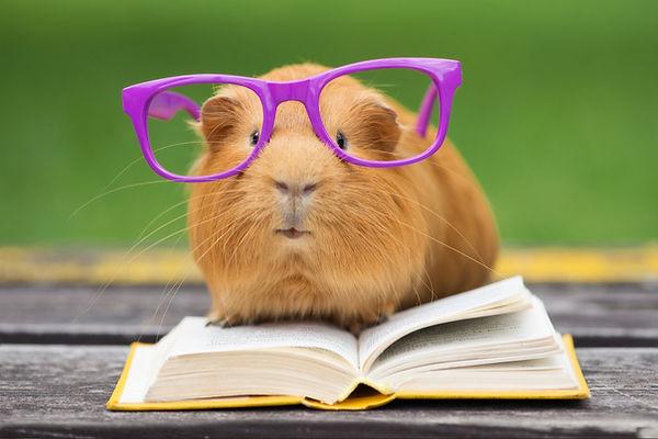 hamsterglasses.jpg