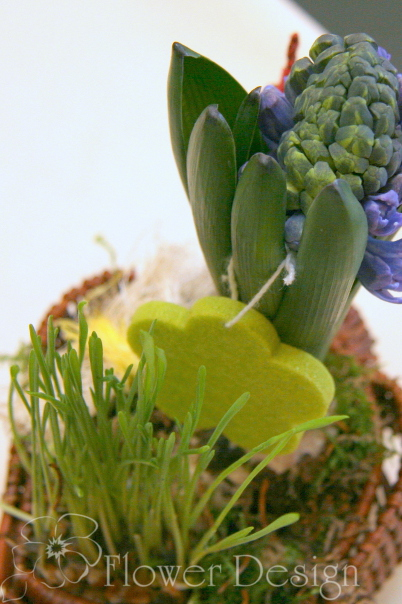 Композиция из горшечных растений (гиацинт).