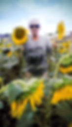 Rony-Sunflower-New.jpg