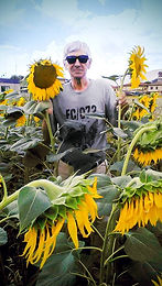 Rony-Sunflower-New.jpg