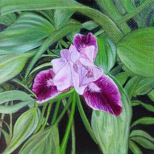 Lillie's Iris