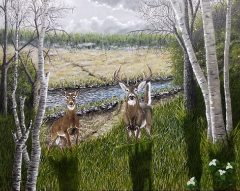 Will Of The Whitetail