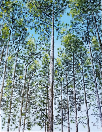 Kawartha Tall Pines