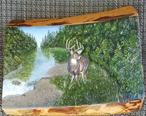 Tall Pines Buck