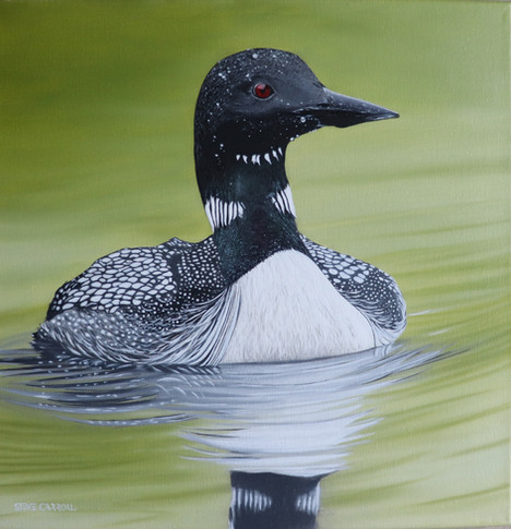 Lillie's Loon