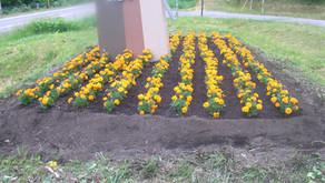 きじひき高原の花植