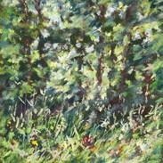 Les herbes fleuries 1