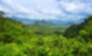 methode-akira-miyawaki-reforestation-arb