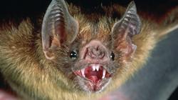 TAG Wildlife Removal Bat