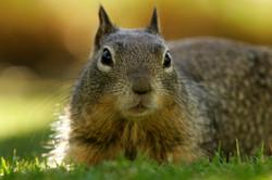 TAG Wildlife Removal Squirrel