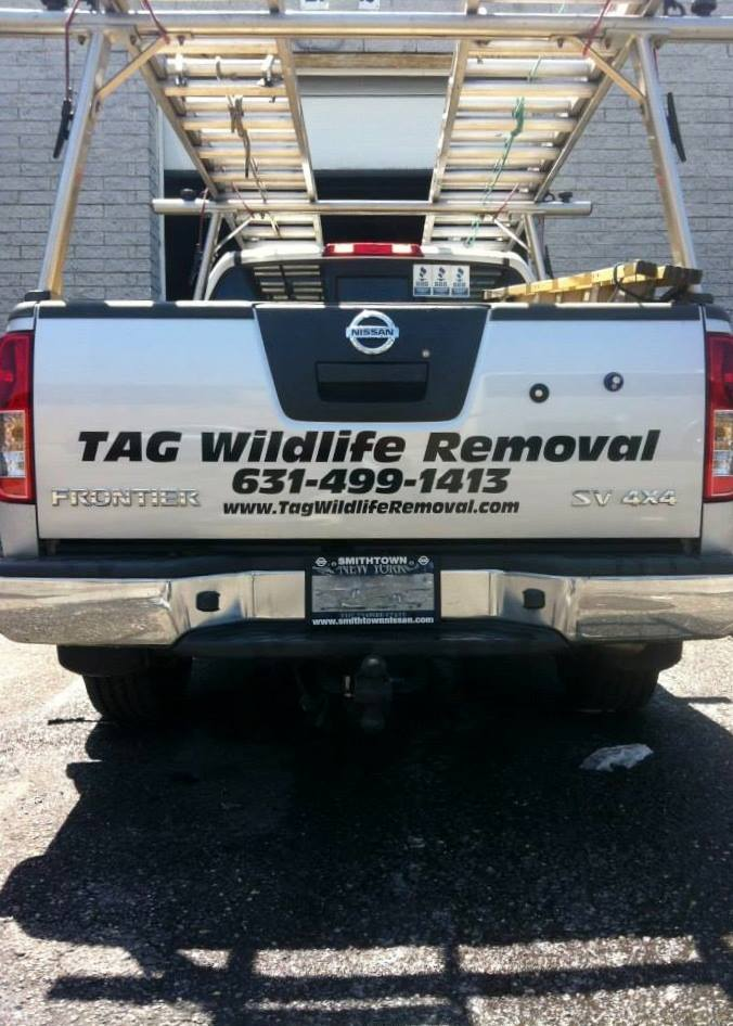TAG Wildlife Removal