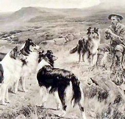 Native Sheepdog.webp