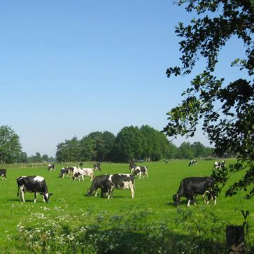 Vallei Horstee.png