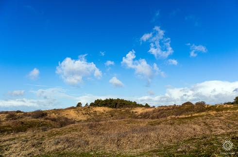 Trees beneath Dutch summer skies
