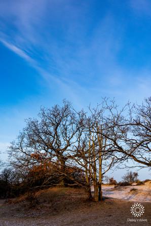 Trees in aurora sunlight