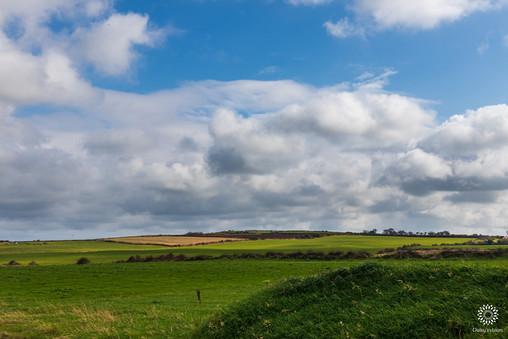 Green fields in summer