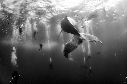 The sea world in 10 b&w stunning photos