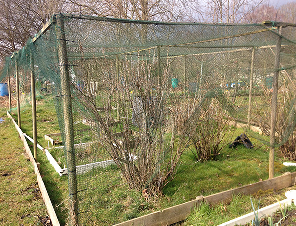 Allotment fruit cage