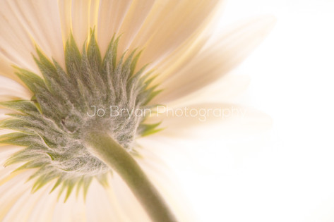 Macro Photography Flower White Rye NY New York Jo Bryan JoBryan photo photography photos atypical point of view