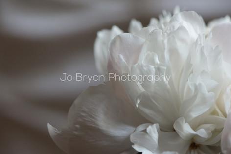 Macro Photography Flower White Pink Rye NY New York Jo Bryan JoBryan photo photography photos