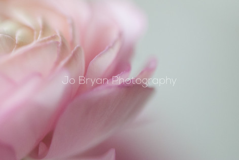 Rye NY New York Jo Bryan JoBryan photo photography photos flower blurred pink atypical point of view