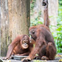 EB _15_09_24_Borneo_5825