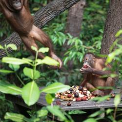 EB _15_09_28_Borneo_6045