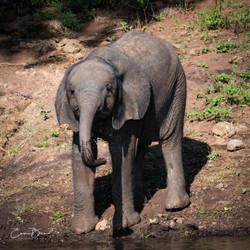 EB_18_04_09_Botswana_0084