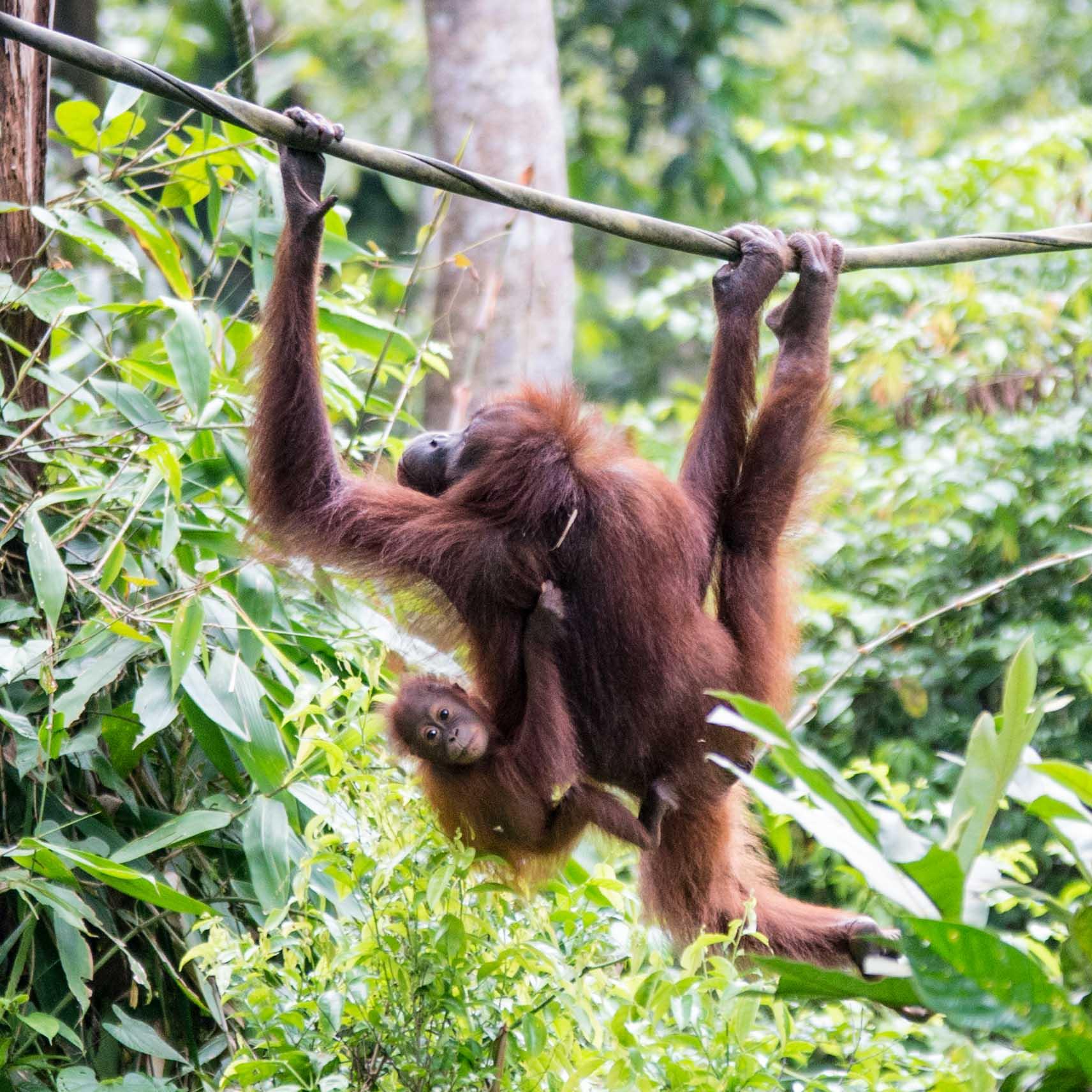 EB _15_09_22_Borneo_4812