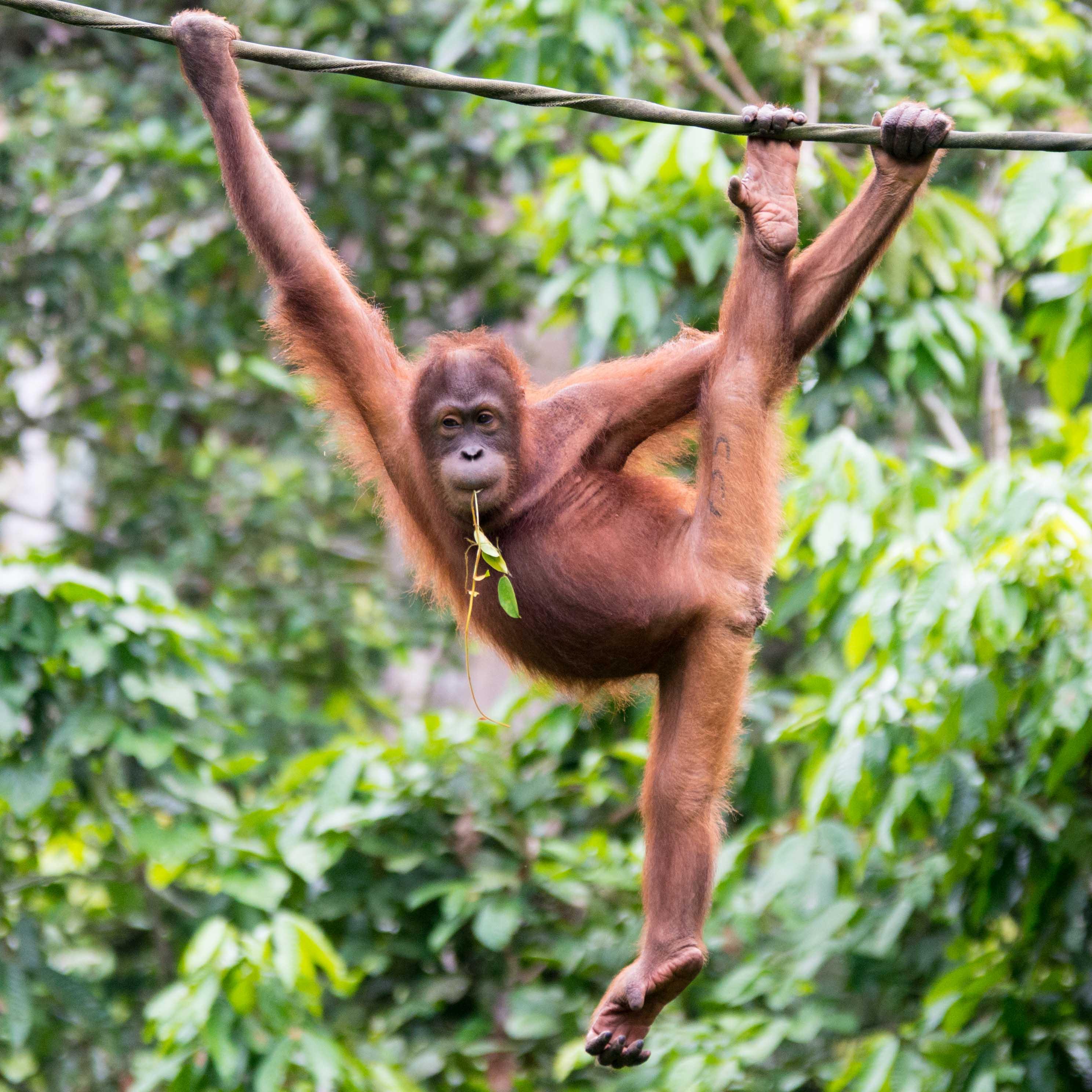 EB _15_09_22_Borneo_4844