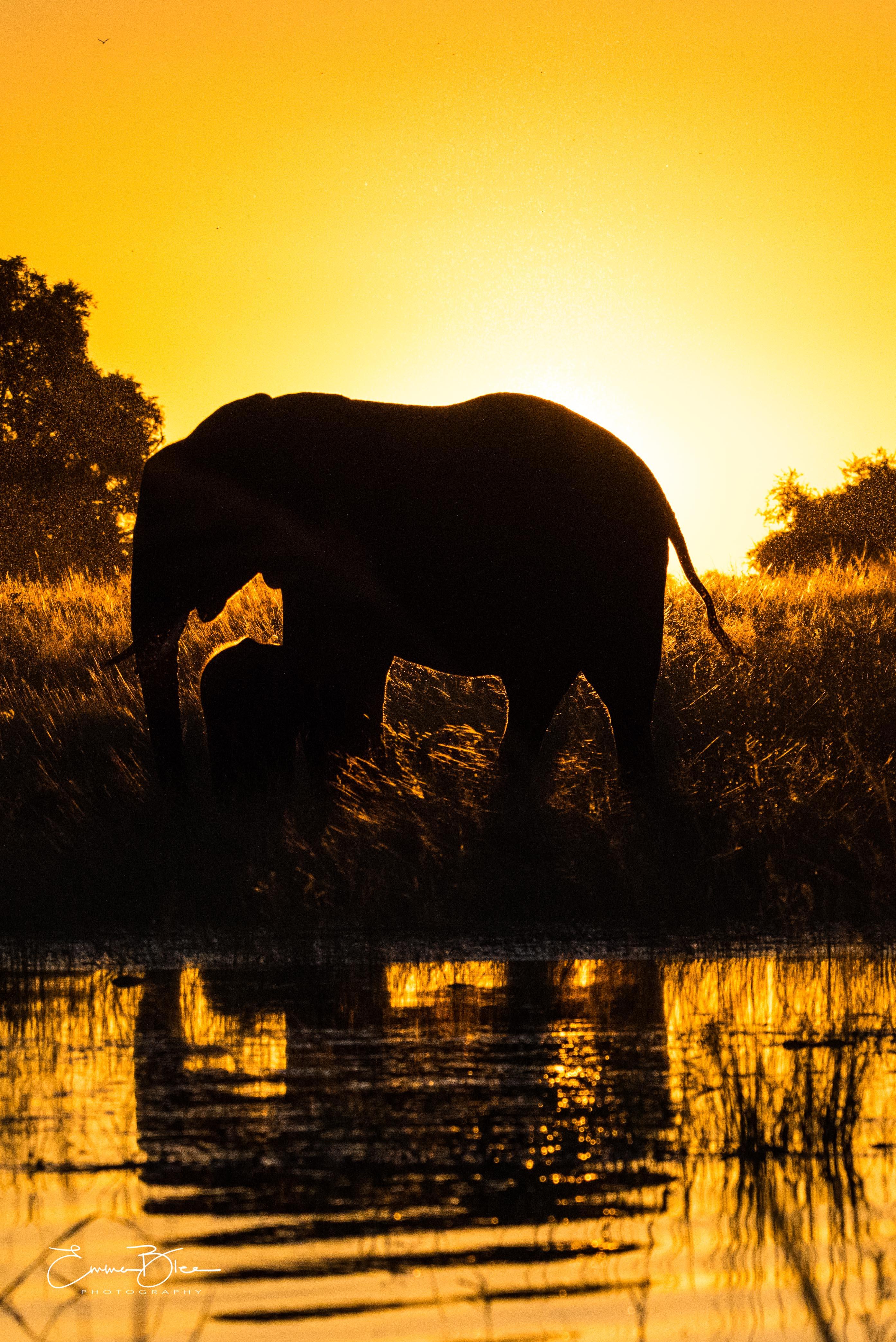 EB_18_04_10_Botswana_1479