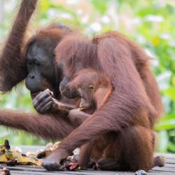 EB _15_09_22_Borneo_4886