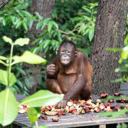 EB _15_09_28_Borneo_6113