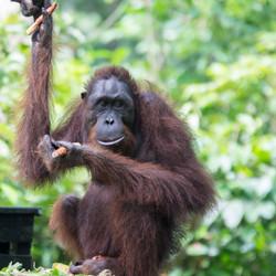 EB _15_09_24_Borneo_5751