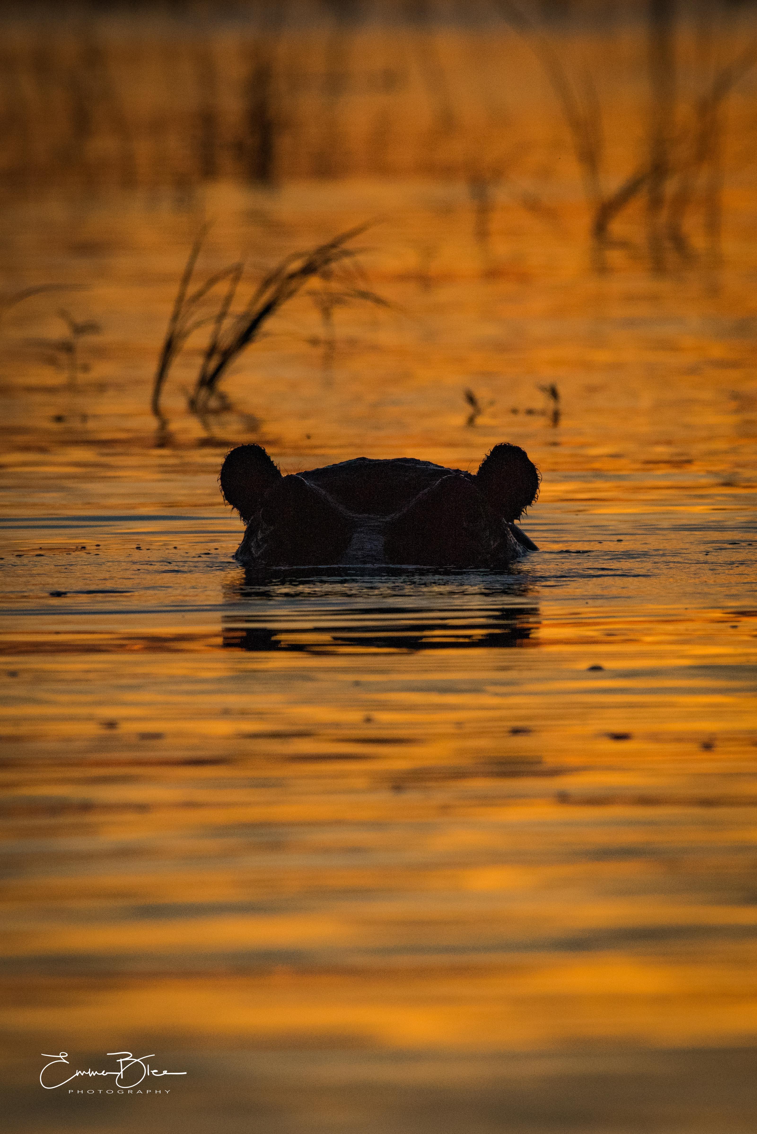 EB_18_04_09_Botswana_0836