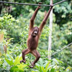 EB _15_09_22_Borneo_4576