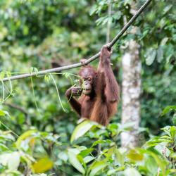 EB _15_09_22_Borneo_4545