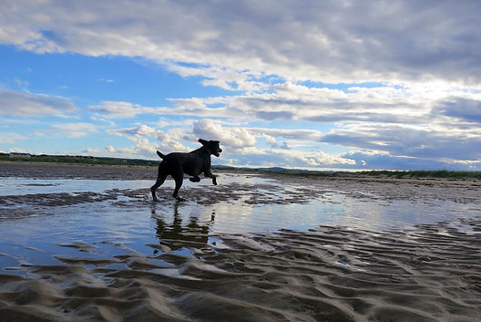 Happy Hounds Matfield at the beach