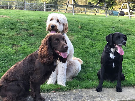 Happy Hounds Matfield Doggy Day Care