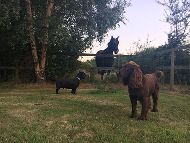 Horse & Dogs @ Happy Hounds Matfield
