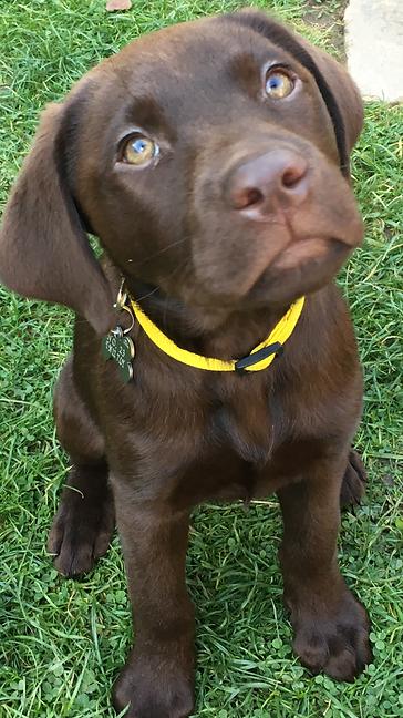 Hapy Hound Matfield Garden Visits for Puppy