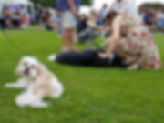 Matfield Fete Dog Show