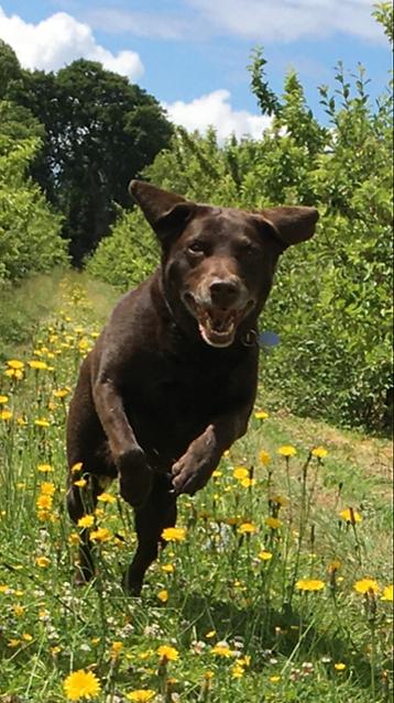 Happy Hounds Matfield Dogs having Fun