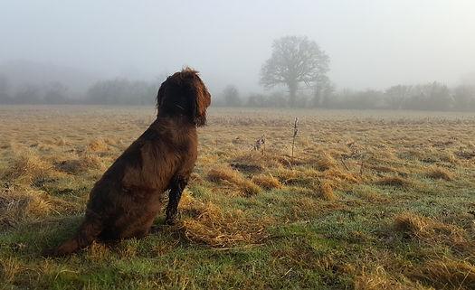 Happy Hounds Matfield - early morning dog walk