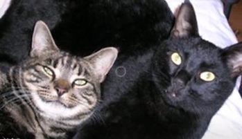 Happy Hounds Matfield Cat Sitting & Cat Feeding