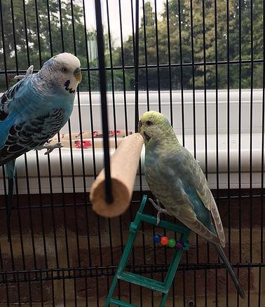 Happy Hounds Matfield Bird Feeding