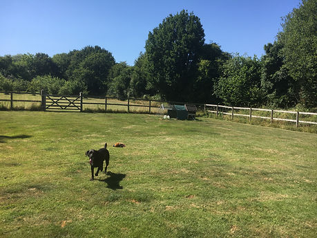 Happy Hounds Matfield Secure Paddock for doggy day care