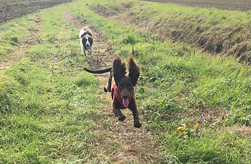 Happy Hounds Matfield having fun on dog walk